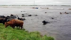 inundacion-3