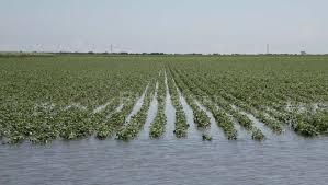 inundacion-6