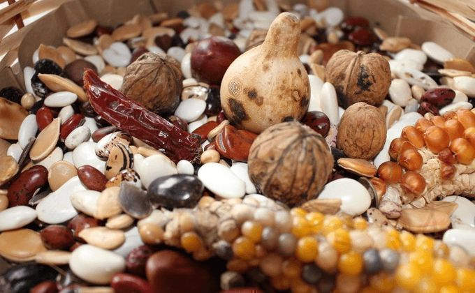 fotos semillas