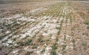 degradación suelos